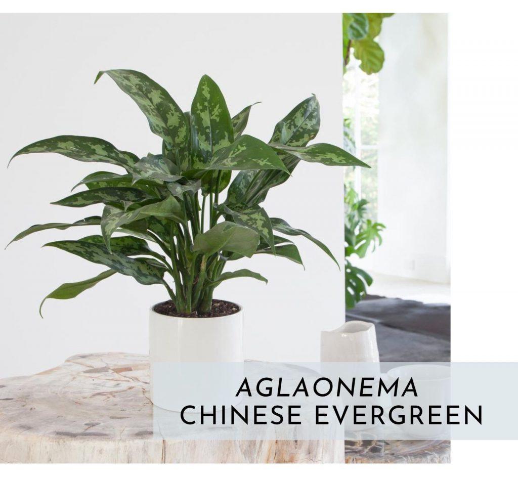 plants for healthy interior design